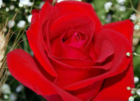 Lục đục hậu Valentine